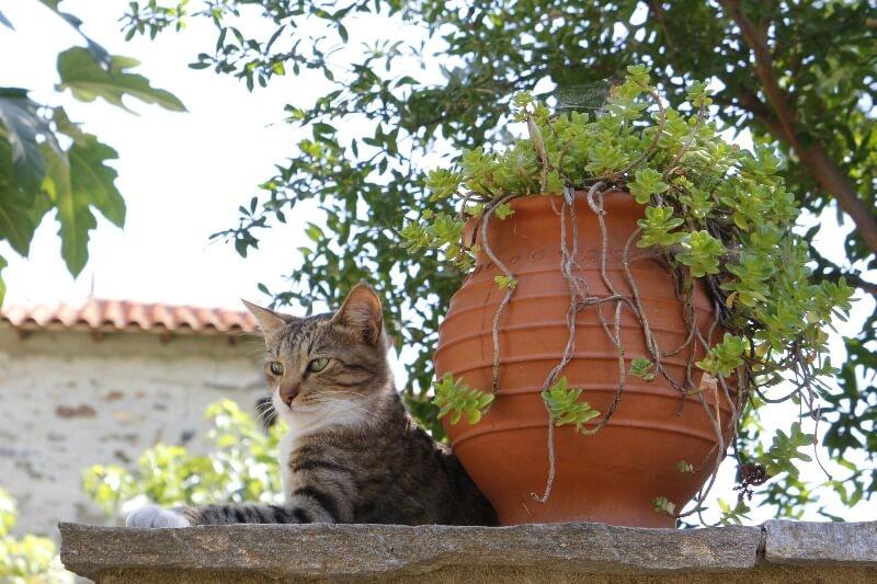 film o koloniji macaka na sirosu header grckaisrbija