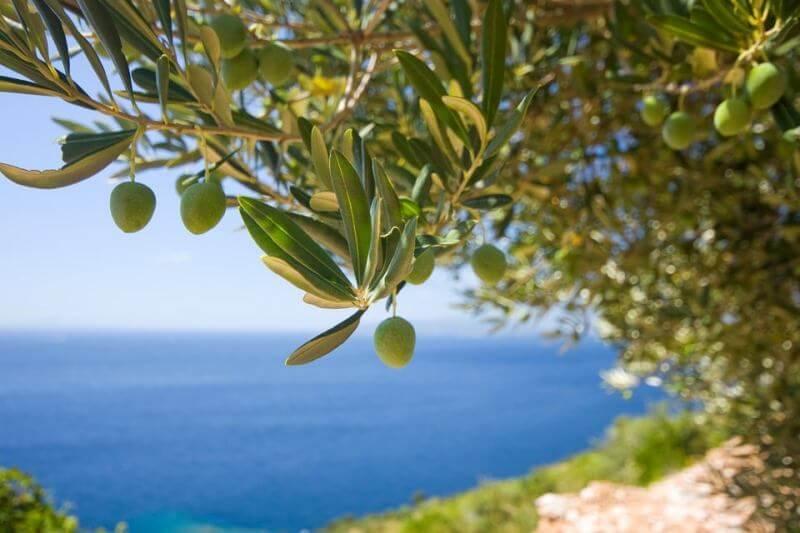 istorija jedne porodice header grckaisrbija