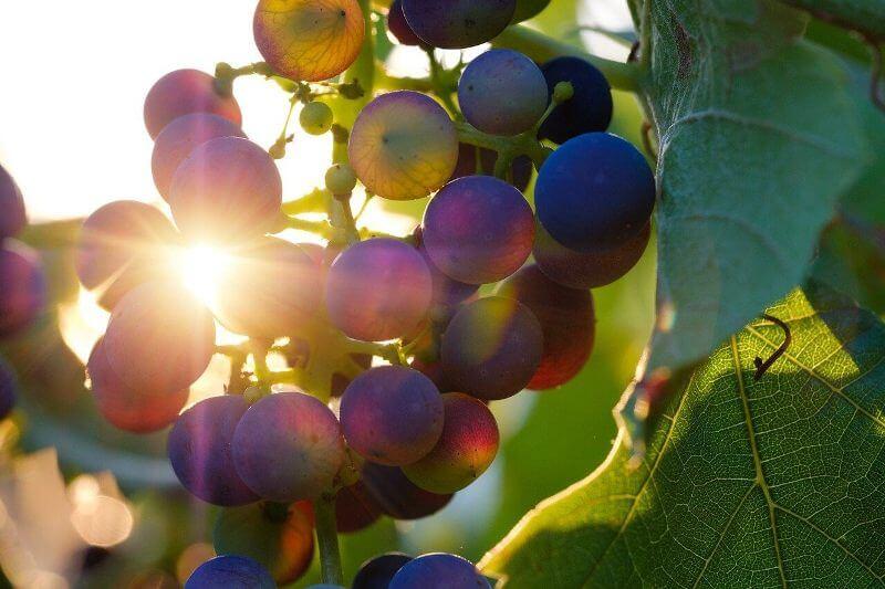 vino u pravoslavnoj hriscanskoj tradiciji header grckaisrbija